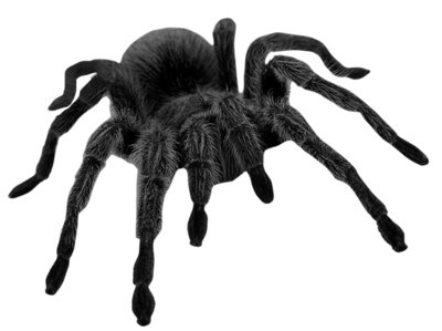 Haunted Black Spider PNG Picture